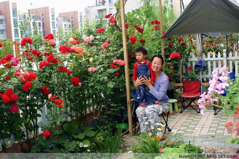 在家养花 - 刘炜大老虎 - liuwei77997的博客