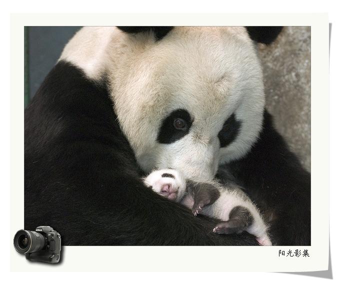 引用 动物世界 14 - 萧思坚工作室  - 萧思坚 博报