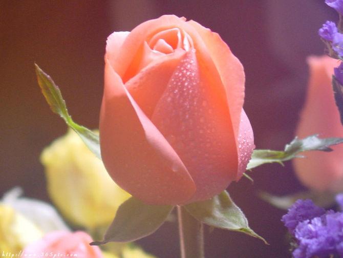 给自己一份好心情 - 紫盈 - ★紫☆盈★的博客