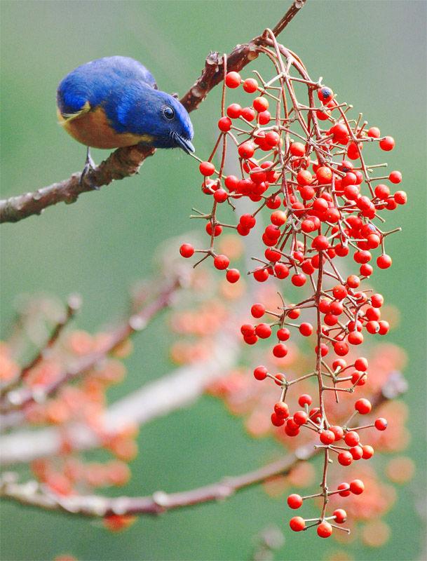 漂亮的花鸟图 - 风语无言 - 风语无言的博客