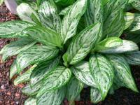 14种植物放入室内的奇异功效 - 无心居士 - 无心插柳