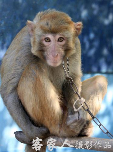 忙里偷闲且看看猴去…… - 客家人 - 客家人·逍遥影像