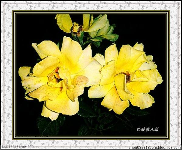 [原]花卉摄影:日日芳菲月月红《月季2》31p - 巴陵散人 - 巴陵散人影室