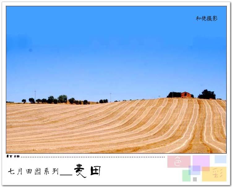 (原创24P)七月田园系列集① --《麦田》 - 风和日丽(和佬)  - 鹿西情结--和佬的博客
