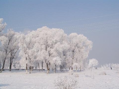冬天的树挂的日志