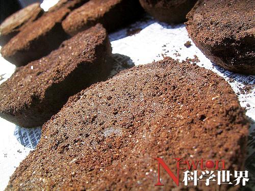 用咖啡渣提炼生物柴油 - kxsj - Newton-科学世界