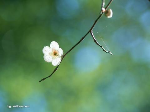 春,若有生(原) - 云眸初湿 - 云眸初湿