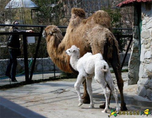 白化病变的可爱动物  - XQDVIP - 中博網歡迎您!