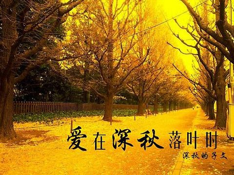 【赏鉴】汪国真诗34首 - 蝴蝶兰 - 蝴蝶兰