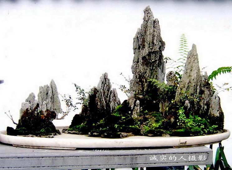 山石盆景 - 凤凰涅槃 - 凤凰涅槃