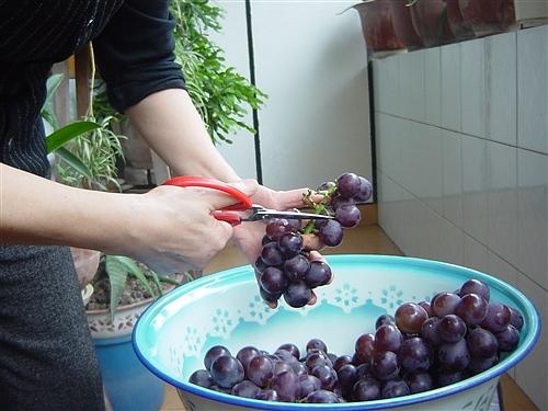 家庭自酿红葡萄酒 - ls7196 - ls7196的博客