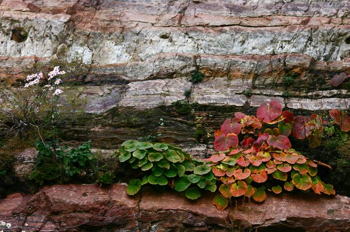 (原创摄影)岩石上的秋色 - 刘炜大老虎 - liuwei77997的博客
