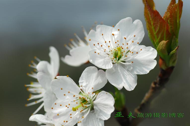 (原摄)春之曲 系列一 - 高山长风 - 亚夫旅游摄影博客