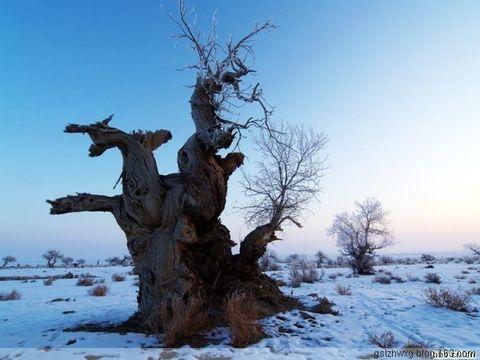 【原创】冬夜短歌 - 洮阳子 - 洮阳子的文学博客