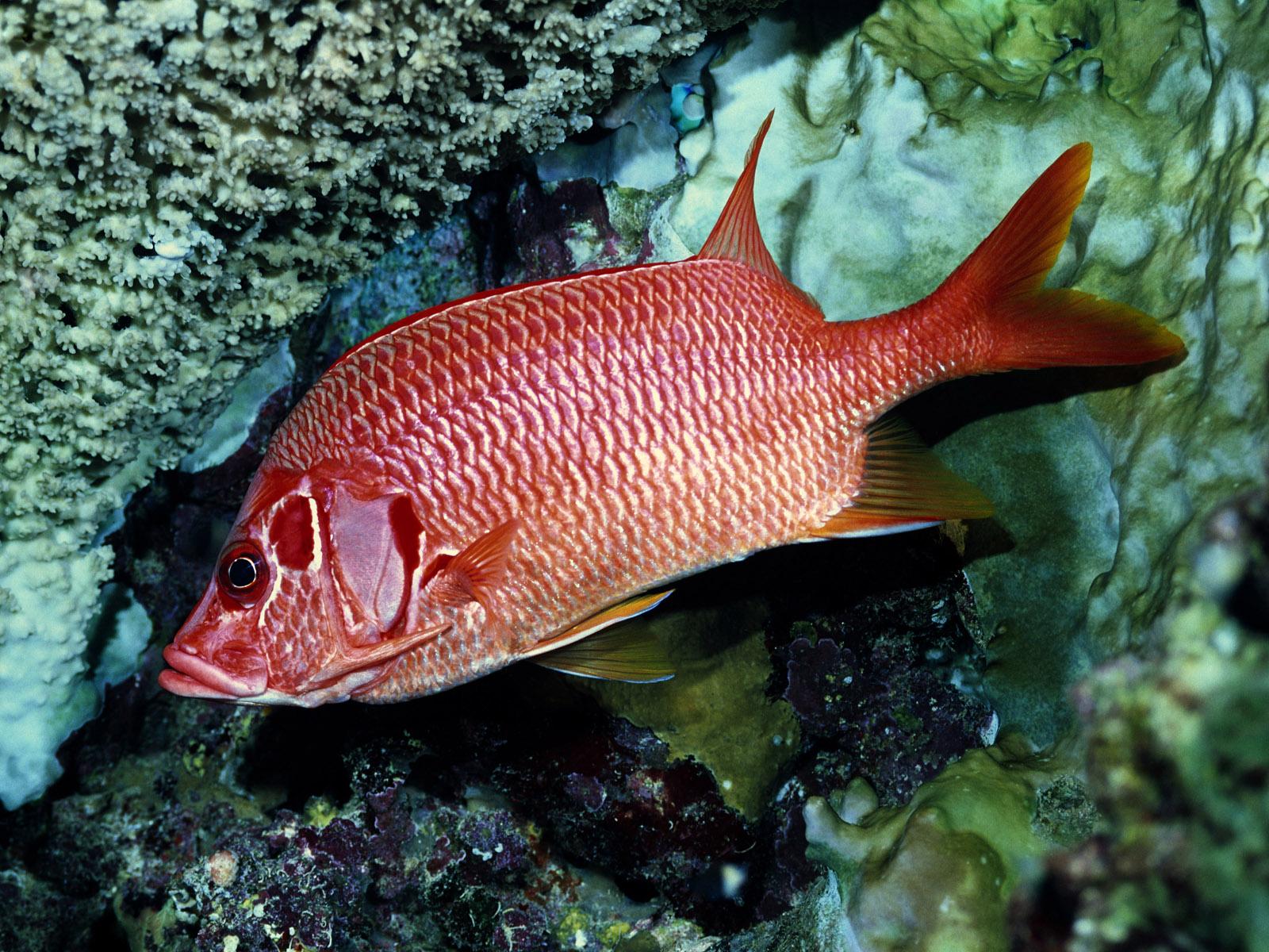 美丽的海底世界(超精美) -   红杏 - 红杏
