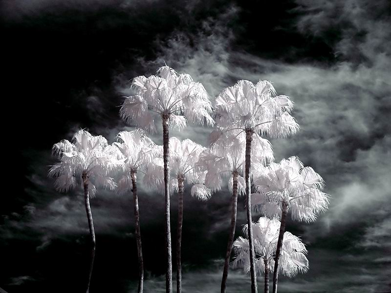 惊人,树木在雷电下变雪白【景物素材图片】 - 寒烟的博客 -