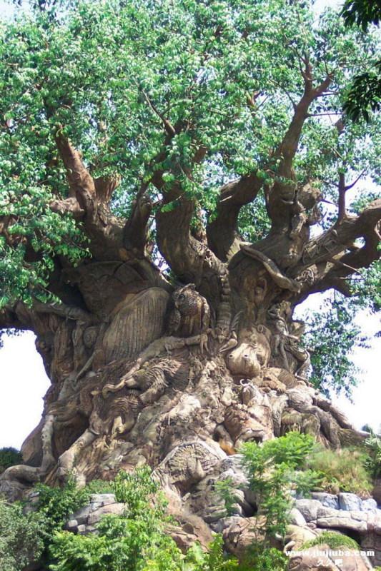 [转] 一辈子难见的神奇大树   - 树叶 - cgglang的博客
