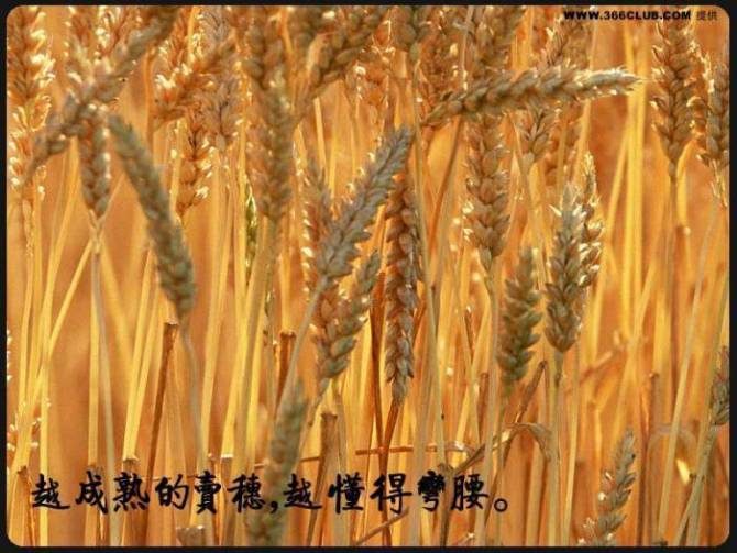 人生格言 - 水蜜桃 - 水蜜桃1314258