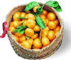 橘子 - 饺子 - ......秘密花园......