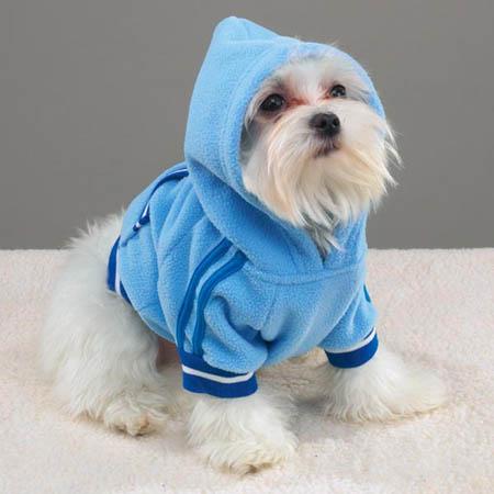 [转载]可爱狗狗时装秀(组图) - 风筝 - 风中的风筝