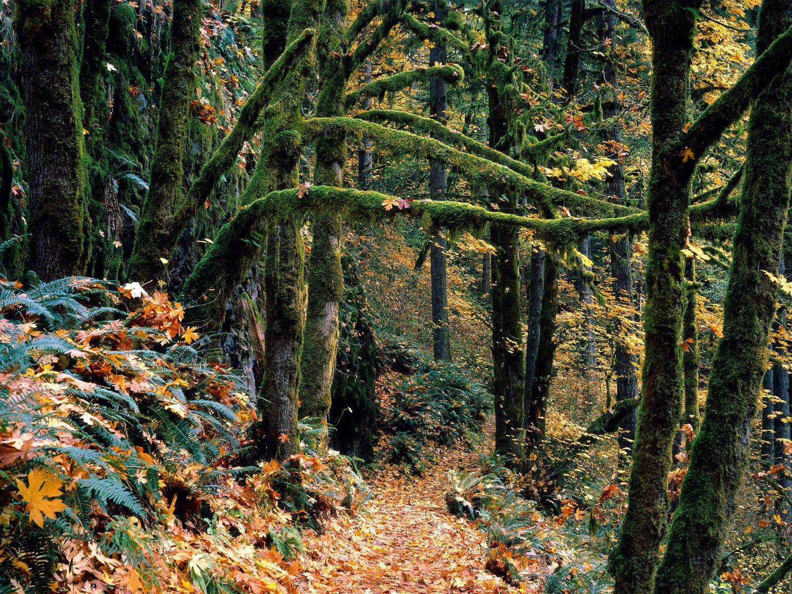 视觉大餐 树木植物图片