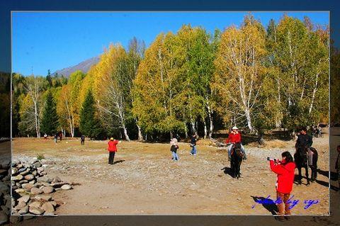 梦幻西域(27)金色白桦林[原创] - 自由诗 - 人文历史自然 诗词曲赋杂谈
