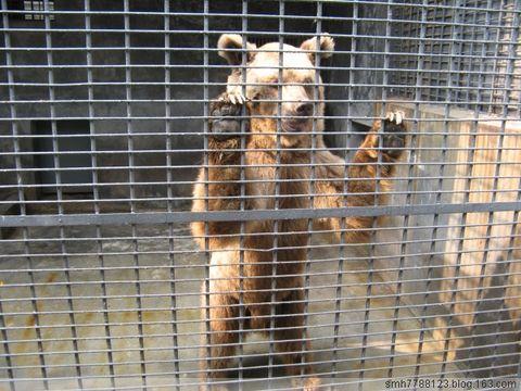 长沙动物园(原) - 人在旅途 - 净土的博客