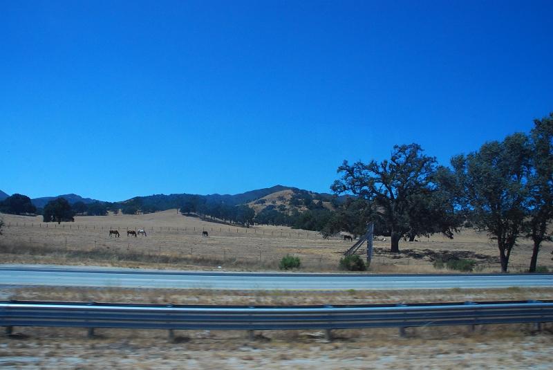 加州阳光(二十三)____老爷车展 - 西樱 - 走马观景