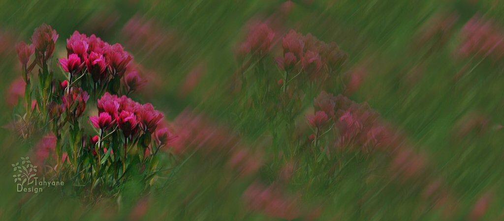 【引用】【图图素材】博客顶图之八——鲜花篇 - 淡月映雪 - 淡月映雪博客