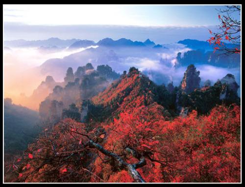 引用  魅力中国之十大秋之胜景 - 黔中人 - 黔中人