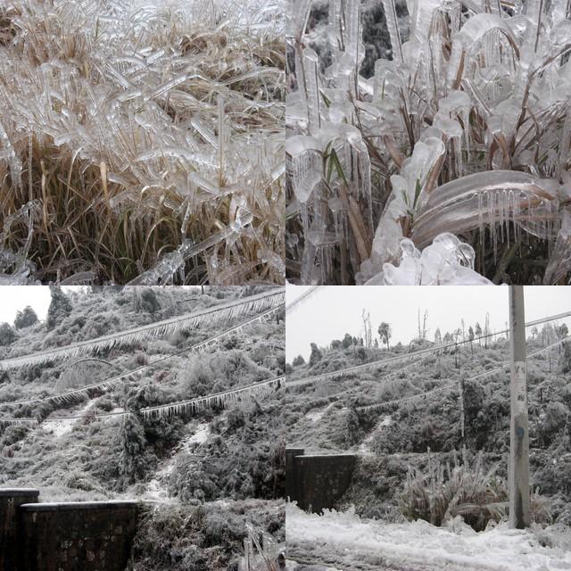 冰雪灾害中的小白 - 小白变棉花糖 - 全世界不懂无所谓