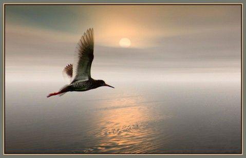 乘着歌声的翅膀  (德)海涅 - angel.yzx - 惠风和畅