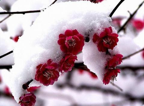 唤春之二(七绝)10首【疏勒河的红柳原创】 - 疏勒河的红柳 - 疏勒河的红柳