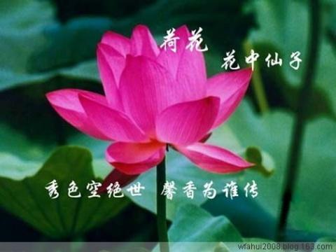 【转载】又一组不错的图片 - chenqfchen - 秋芳的博客