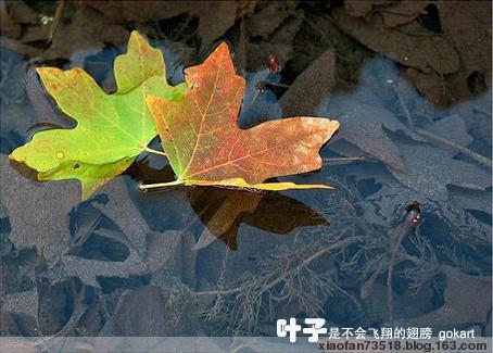 [原]眷恋小城 - ヾ潇潇ヾ  - 潇潇紫梦园
