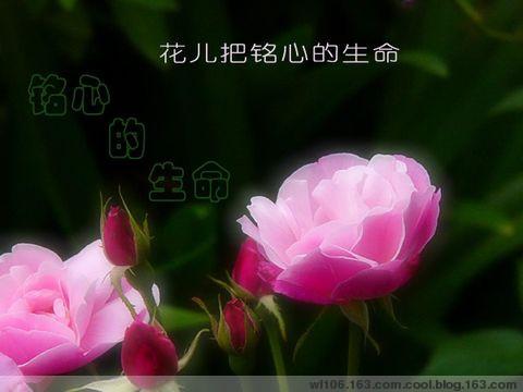 精美圖文欣賞71        - 唐老鴨(kenltx) - 唐老鴨(kenltx)的博客