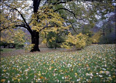 组图:秋天的纽约中央公园 - 潘石屹 - 潘石屹的博客
