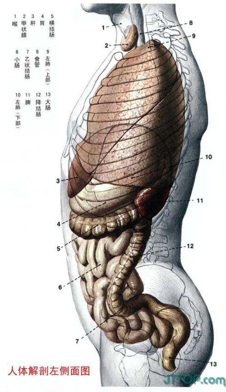 很不错的解剖图图(对战友们可能有帮助) - kugua58906842 - kugua58906842的博客