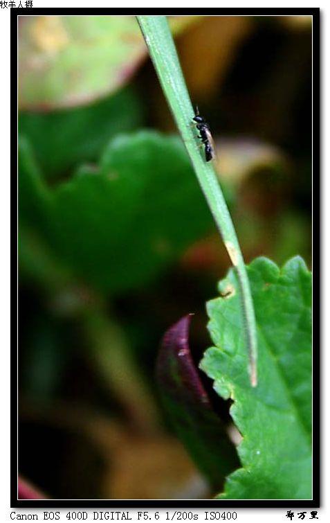 【投稿作品】之昆虫 - 玉树牧羊人 - 玉树牧羊人的博客