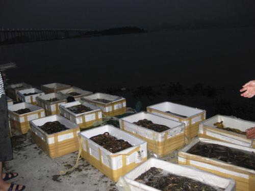 5月4日虎门炮台放生——布吉农批、侃价、搬运、放生 - 阿德 - 深圳放生