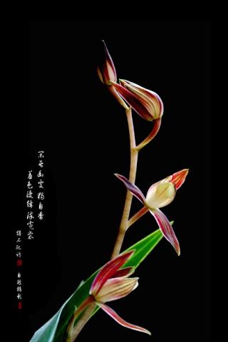 【制作】淡淡兰香 - 東言 - 東言的博客