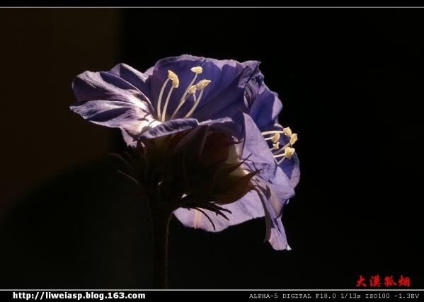 【原创】花祭 - 梅子 - 活水