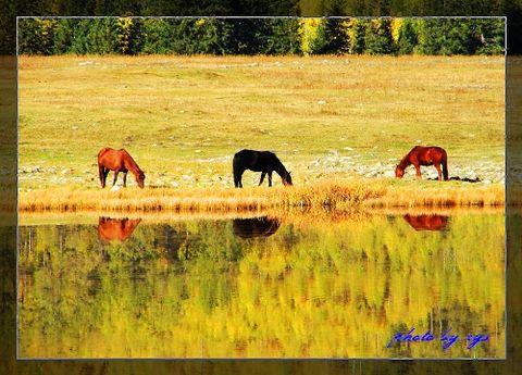 [原创]梦幻西域(05/35)喀纳斯鸭泽湖 - 自由诗 - 人文历史自然 诗词曲赋杂谈