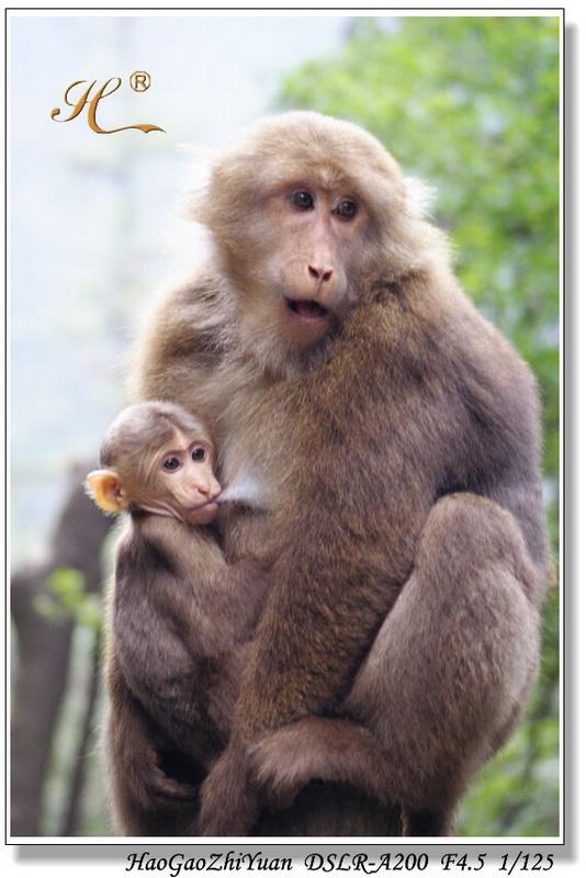 灵猴的召唤——畅游峨眉(一)【原创】 - 浩高致远 -      浩高致远欢迎您光临