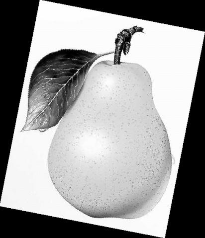 """""""梨"""" - 饺子 - ......秘密花园......"""