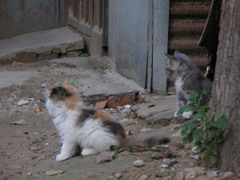 院子里的小猫猫 - 喜琳 - 喜琳的异想世界