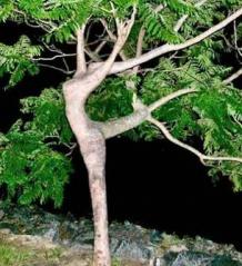 寂寞嫦娥舒广袖图  - 石林 - 石林的博客