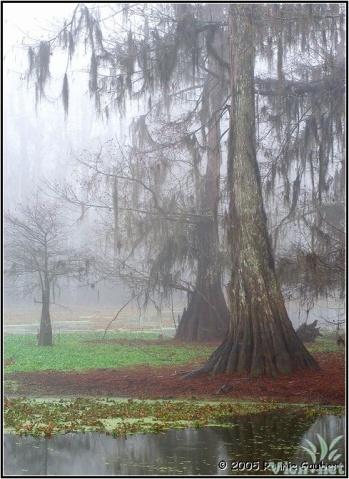 我是那飘渺的薄雾(疏勒河的红柳原创) - 疏勒河的红柳 - 疏勒河的红柳