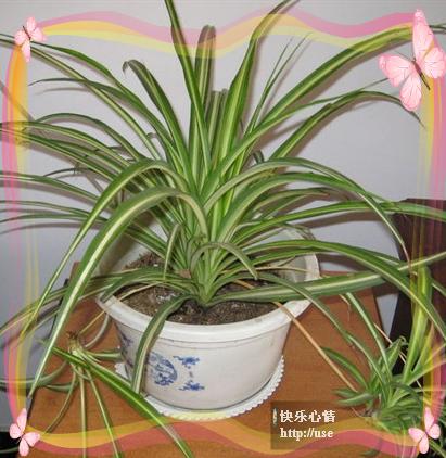 18种常见室内植物的功效,知道以后就别乱摆了 - 山东省聊城市少北拳研究会博客 - 山 东 省 聊 城 市少北拳研究会博客