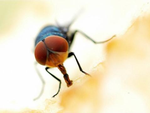 七律--博客苍蝇 - 恺撒大帝 - 恺撒大帝--闻香识女人